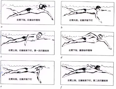 游泳技术专区 69 自由泳