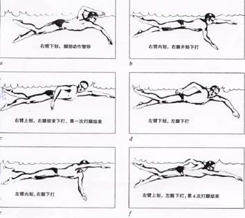 爬泳悠泳 中国游泳网 最火的游泳社区